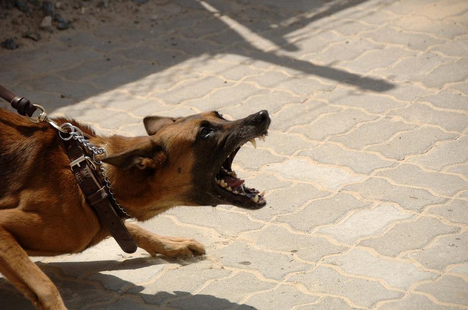 Przy pomocy agresywnego psa zrabowała portfel