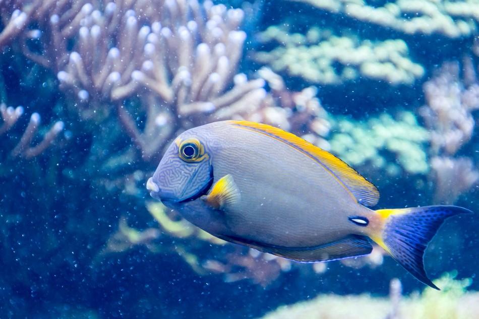 Akwarium morskie – jak założyć i czy warto?