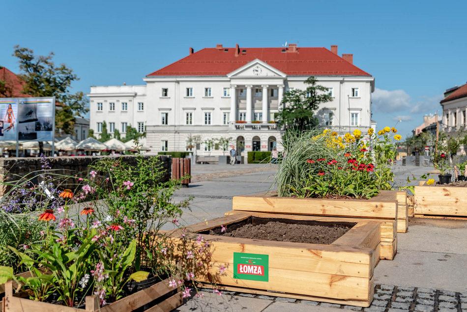 Łąki Łomży na Rynku w Kielcach