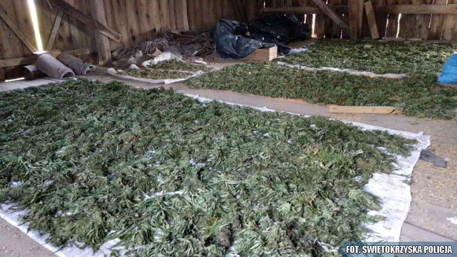 Policjanci zabezpieczyli w tydzień ponad 160 kg narkotyków