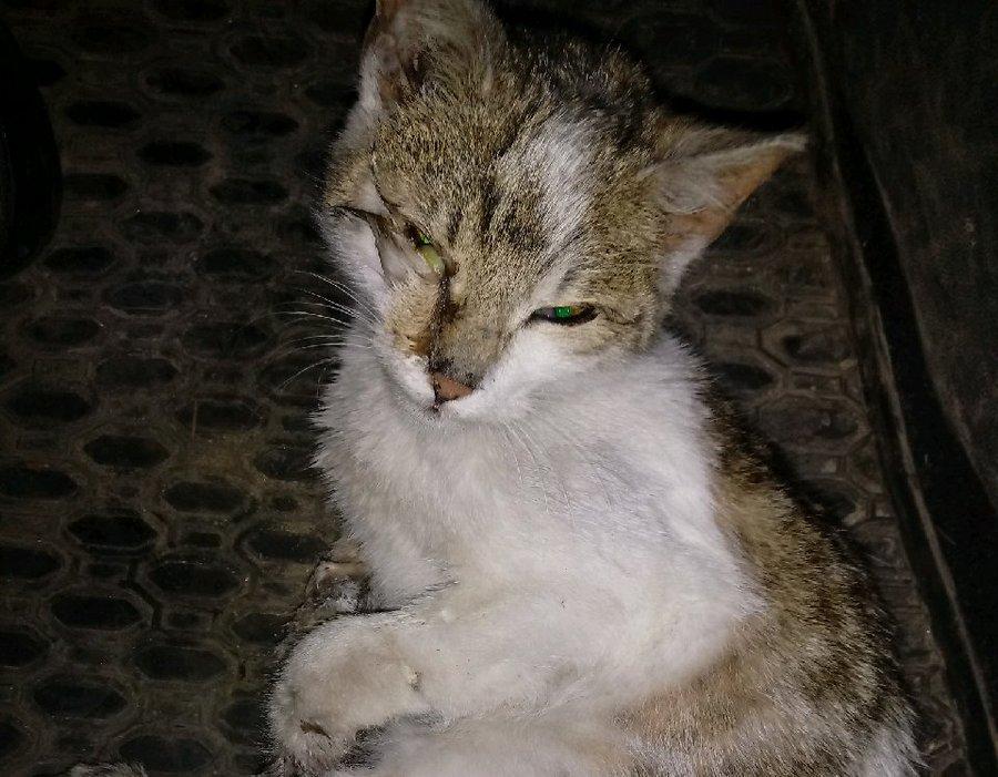 Skrępował i wyrzucił kota do rowu. Grozi mu 3 lata. Policjanci poszukują świadków i