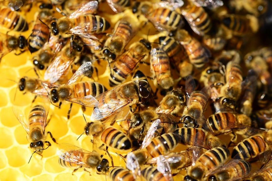 Dzień pszczoły w gminie Zagnańsk