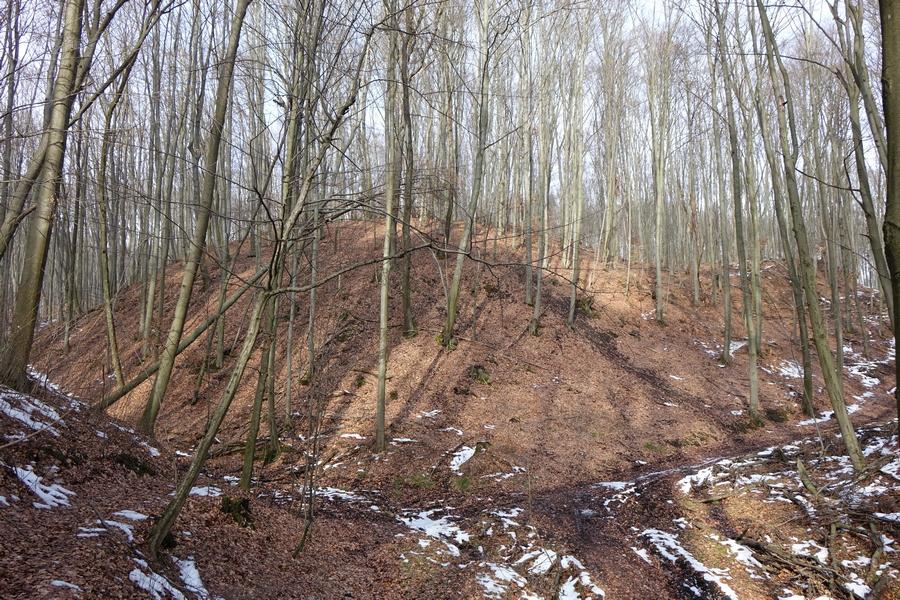 Czy w Zgórsku znajdują się ruiny średniowiecznej warowni? Szykują się ekscytujące badania