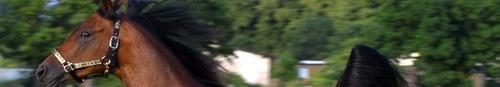 kielce echo miasta wiadomości dnia kraina pięknych koni