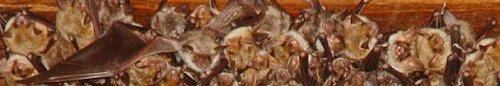 kielce wiadomości Policzyli nietoperze w Jaskini Raj