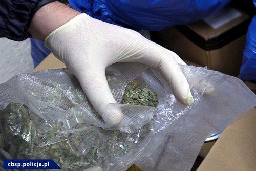 kielce wiadomości Funkcjonariusze CBŚP przejęli 70 kg marihuany