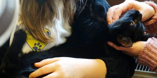 kielce wiadomości Koty świętowały w Muzeum Zabawek (ZDJĘCIA)