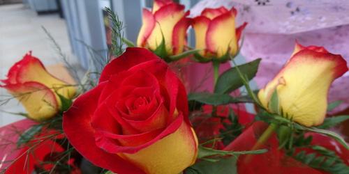 kielce wiadomości Kwiatek z okazji Dnia Kobiet?