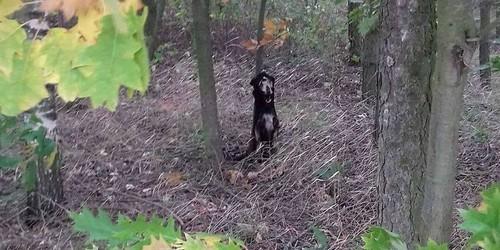 kielce wiadomości Zwyrodnialec zamordował psa. Zwierzę zostało powieszone i podpalone (DRASTYCZNE ZDJĘCIA)
