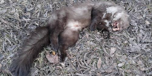 kielce wiadomości Protestują przeciwko spalarni martwych zwierząt