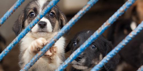 kielce wiadomości Rozpoczyna się rozbudowa schroniska dla zwierząt w Dyminach