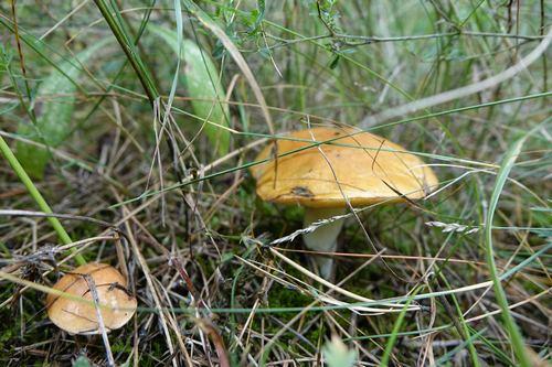 kielce wiadomości W Zagnańsku całą noc szukali zaginionego grzybiarza