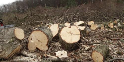 kielce wiadomości W Kielcach trwa wielka masakra drzew (ZDJĘCIA,WIDEO)
