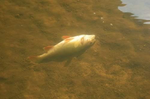 kielce wiadomości Zanieczyszczona rzeka Bobrza. Miedziana Góra wydaje oświadczenie w sprawie