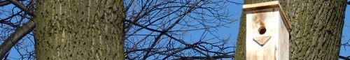 kielce wiadomości Powiesili budki dla ptaków żeby ratować drzewa pod WDK - zdjęc