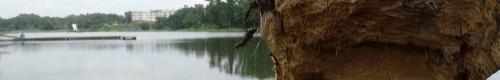 kielce wiadomości Bobry prowadzą wycinkę drzew przy kieleckim zalewie (zdjęcia)