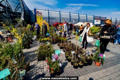 kielce wiadomości Kiermasz letni w Targach Kielce- ogród, antyki, rowery i festiwal food trucków
