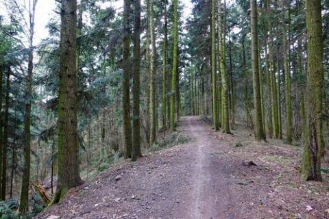 kielce wiadomości Wprowadzono zakaz wstępu do lasu