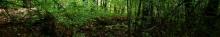 kielce wiadomości W lesie odnaleziono zakrwawioną kobietę