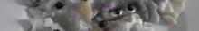 kielce wiadomości Botwinka i pierogi z jagodami po nieudanych rewolucjach (zdjęc
