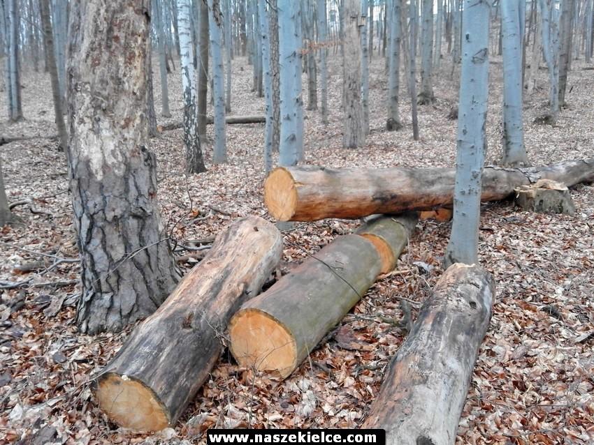Na terenie rezerwatu Karczówka trwa wycinka drzew