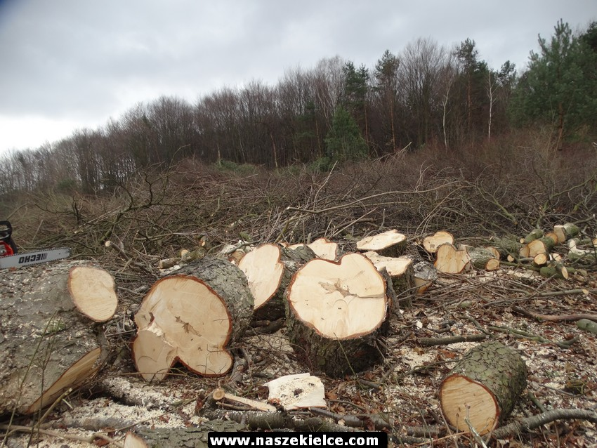 Wycinka drzew w Kielcach 06.03.2017