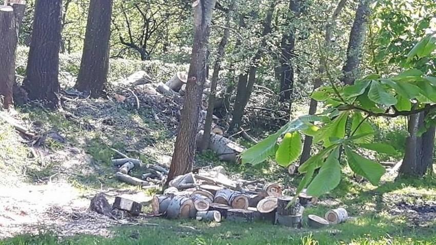 Wycinka drzew w dolinie Silnicy 19.05.2017